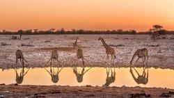 Namibia, Etosha National Park, Wild Animals - Giraffe