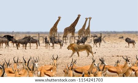 Namibia Nature Explore