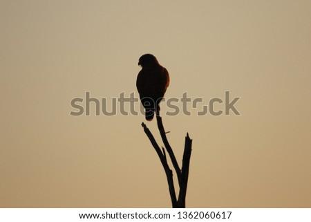 Namibia wildlife animals #1362060617