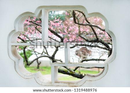 Nanjing Plum Blossom Plum Blossom