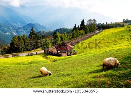 Nantou County, Taiwan, October 24 2017: Sheeps Farm #1035348595