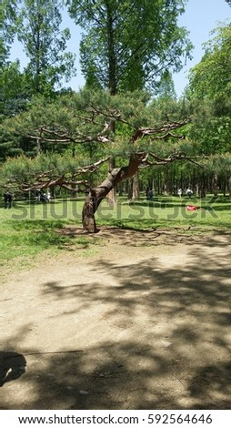 Naomi Island is very popular to those who love Korean drama since this is where Winter Sonata was shot.  #592564646