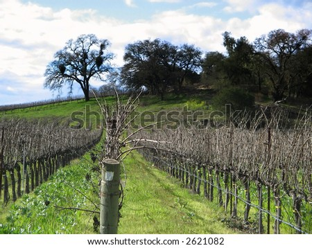 Napa Valley California vineyard fields in early spring with distant green hills