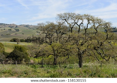 Napa Valley California Vineyard in Spring