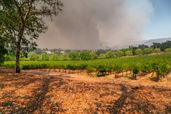 Napa Valley Vineyards Engulfed by Wildfire