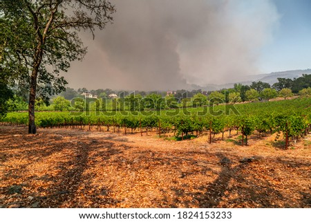 Napa Valley Vineyards Engulfed by Wildfire Stock fotó ©