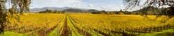 Napa Valley Vineyards Panoramic