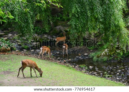 Nara, Japan - july 31 2017 : deers in the Nara park Stock photo ©