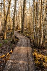 Narrow Board Walk Zigzags Through Swamp in Louisiana park