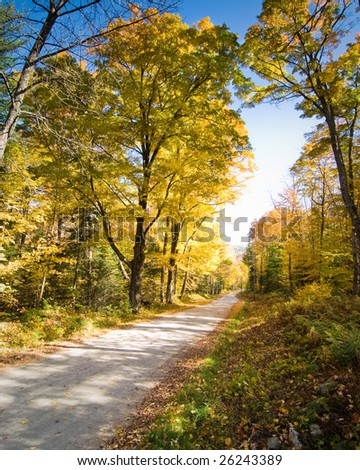 Narrow dirt road crossing a fall forest scenery