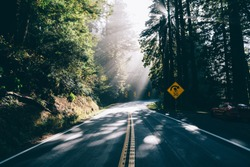 Narrow highway with road signs among tall trees leading into woods during summer day in warm nature with rays of sun