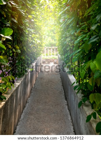 Narrow Natural Hidden Alley Way Corridor or Secret Passageway with Dense Green Vine on Both Side and Bright Light At The End of Tunnel Garden. Door To Heaven Freedom