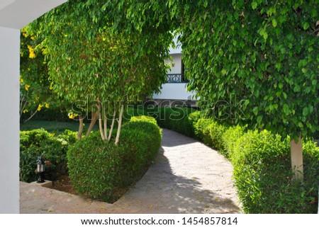 Narrow path, stone path through green mini trees and shrubs #1454857814