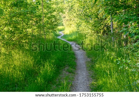 narrow path through young green forest in Sweden Photo stock ©