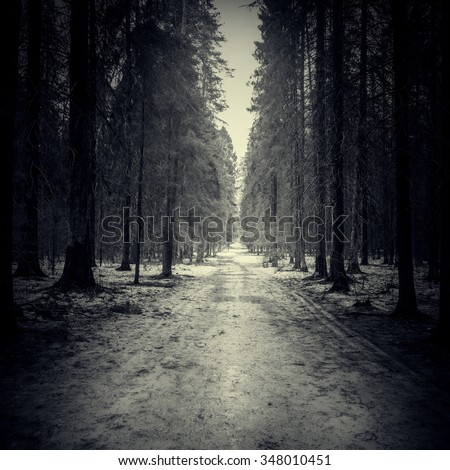 Stock Photo Narrow road through the dark forest at spring evening time.
