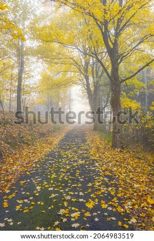 Narrow rural asphalt road covered by maple leafs