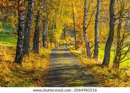 Narrow rural asphalt road in autumn time