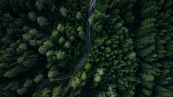 Narrow street between woodland, drone's view
