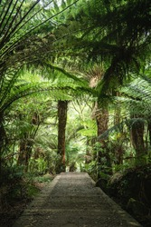 narrow track in the forest near Hopetoun falls, Victoria, Australia with ferns and trees