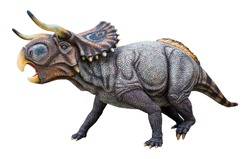 Nasutoceratops is a herbivore genus of a Ceratopsian dinosaur, It is a basal centrosaurine which lived during the late Cretaceous period, Nasutoceratops isolated on white background with clipping path