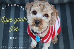 Nation love your pet day, 20 february, text on image