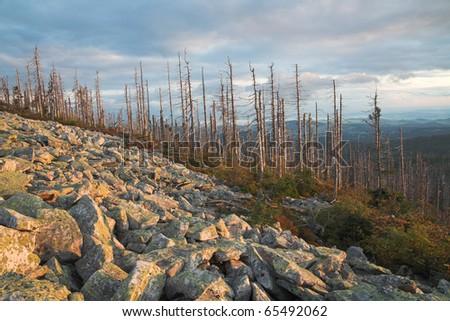 "national park ""Bavarian Forest"""
