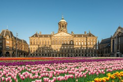 National tulip day at the Dam Square with the Royal Palace on the background in Amsterdam, Netherlands. Landscape and nature travel, or historical building and sightseeing concept