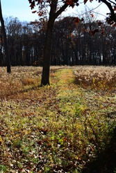 Native American Burial Mound in Autumn with blue skies above. The  Lizard shaped Indian Effigy Mound in an open area At Lizard Mound County Park in Farmington Wisconsin is in Washington County.