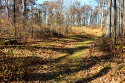 Native American Effigy Mound at Lizard Mound County Park in Farmington, Wisconsin on a warm autumn morning with a walking path to the right as observing the tail section of the Lizard shaped mound.
