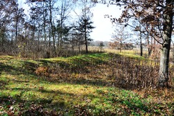 Native American Lizard shaped Effigy Mound at Lizard Mound County Park in Farmington, Wisconsin on a warm autumn morning with long shadows.  Oak leaves cover the ground around the Indian Burial Mound.