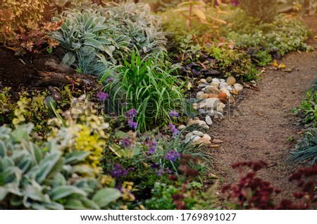 Natur fall garden growing. Autumn garden background with various flowers near path road. Bright flower background. Flowers in the morning in park