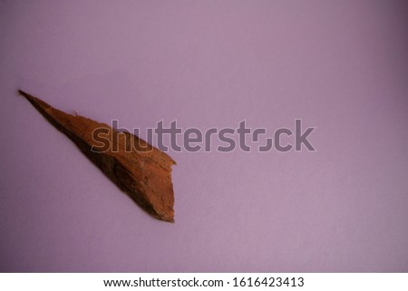 Natural aromatic sandalwood isolated on a pink background