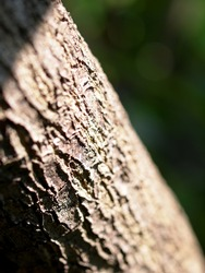natural artistic lines of light brown color rough tropical tree bark closeup texture detail selective focus blur background
