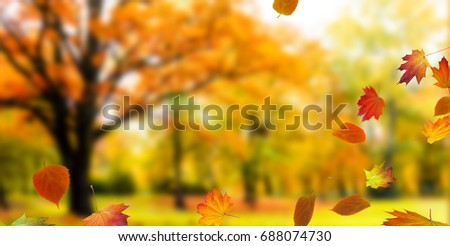 natural autumn background with fall leaves #688074730