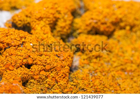 Natural background. A lichen
