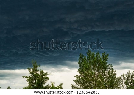 Natural background. A picture of an approaching storm. Tree branches in front of storm clouds.