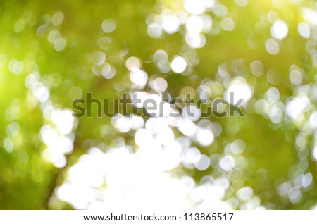 natural background blur. natural composition
