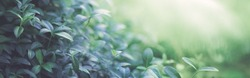 Natural background border with fresh juicy foliage with soft focus outdoors in nature, panorama, copy space, atmospheric image in soothing muted dark green tones