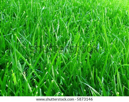 Natural background: Close-up of a green grass field