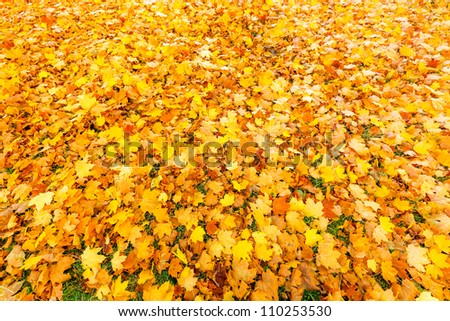 Natural background: Colorful autumn foliage