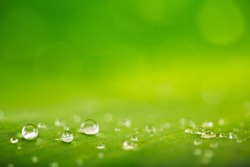 Natural background, fresh green leaf texture and water drops