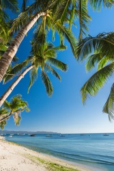 Natural background from Boracay island with coconut palms tree leafs, blue sky and white beach Travel Vacation