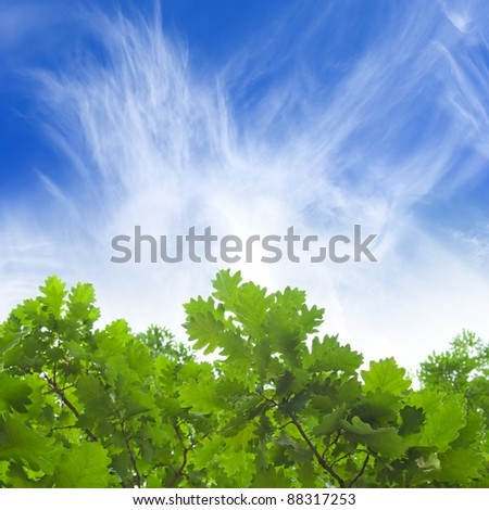 Natural background - green oak leaves, blue sky, white clouds