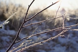 Natural background made of frozen tree branch covered by ice and snow during the sunny day in winter