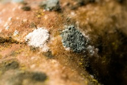 Natural background of a mold with a macro. Mold on food increase in fruit. Shades of green on mold. The texture of toxic green mold with dark green and white-orange spots.