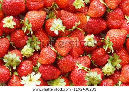 Natural Background of Freshly Harvested Ripe Juicy Strawberries. Lots of Fresh Red Berries with Green Leaves, top view                                                             #1192438231