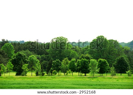 Natural background of young green forest with white copy space