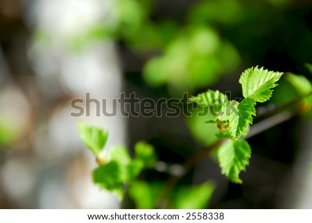 Natural background of young green spring leaves