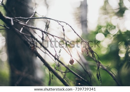 natural background, trees, branches, leaves #739739341