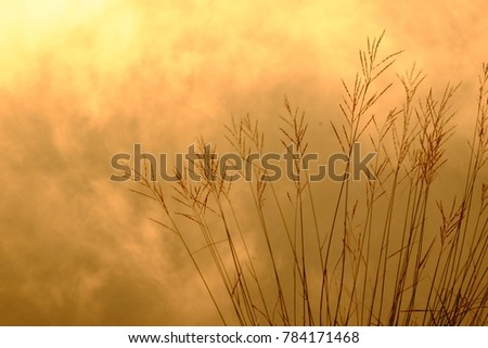 Natural background with sunset lighting and many foggy. Thick of Foggy weather in orange lighting.